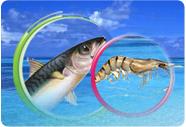 الأسماك اليمنية