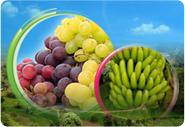 المنتجات الزراعية اليمنية